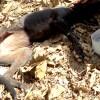 感動 犬 保護 衰弱瀕死!「助けて」と鳴き声をあげた野良犬に、優しさが生む幸運が降りそそぐ