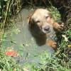 感動 子犬 救助 下水溝に落ちた子犬の鳴き声を聞いたのは優しい警察官…幸せの始まり