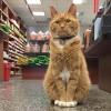 感動 子猫 保護 野良猫を拾ったら、みんなの愛情を受けて成長し、いつしか看板ニャンコへ