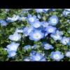 【作業用BGM】 一青窈 福山雅治 ほか J-POP ピアノ メドレー / Music for study and work – Jpop Piano