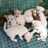 感動 子犬 救助 韓国で食用に飼育された10匹の子犬を救う!海を越えて里親のもとで幸せを
