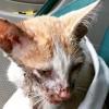 感動 猫 保護 「楽にしてあげよう」獣医が諦めた、高速道路で事故に遭った酷い状態の猫が…
