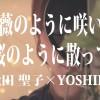 【薔薇のように咲いて桜のように散って 】 松田聖子×YOSHIKI COVERED BY TORU×Mayumi 『せいせいするほど、愛してる』TBSドラマ主題歌