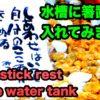【金魚と貝とエビ】相田みつをの箸置き入れてみました